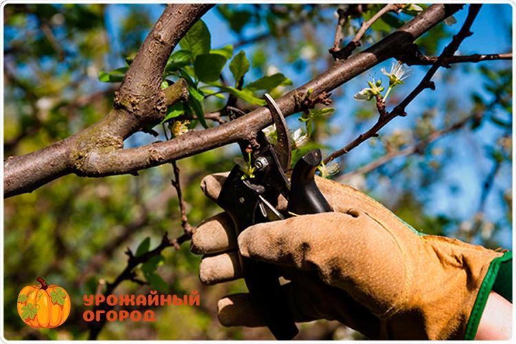 обрезаем дерево