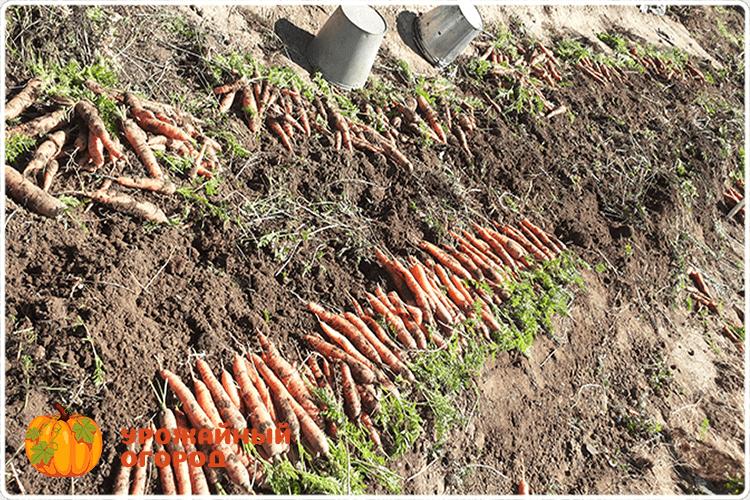убираем морковь