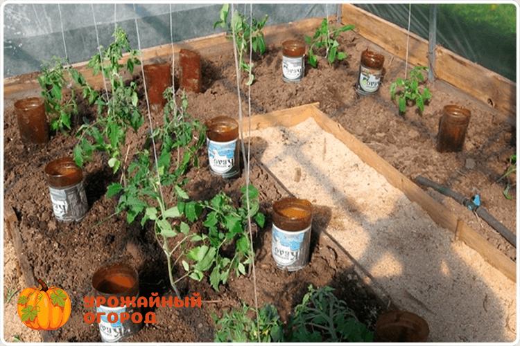 капельный полив томатов