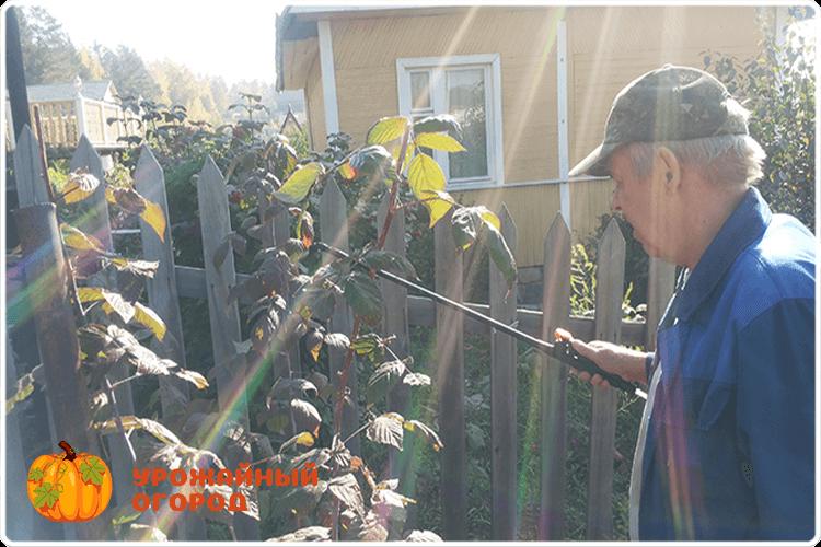 обработка малины