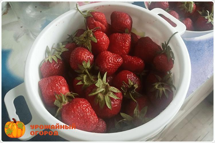 урожай ягоды клубники